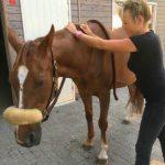 massage paarden drenthe