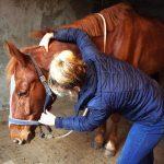 massage paard drenthe