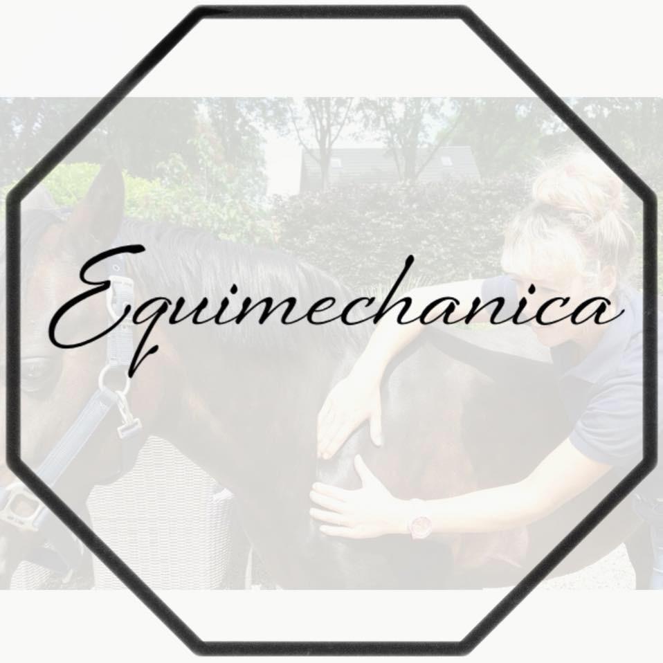 Massage voor paarden Equimechanica