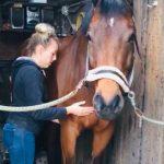 massage paard groningen