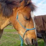 pony massage zuidlaren janine equimechanica
