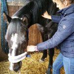 paarden massage groningen